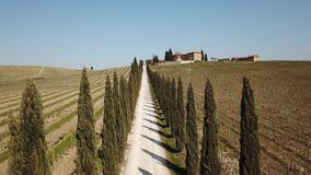 Tuscany, aerial landscape of a cypress avenue near the vineyards. Spring time stock video