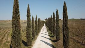Tuscany, aerial landscape of a cypress avenue near the vineyards. Spring time stock footage