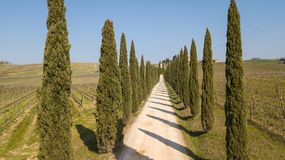 Tuscany, aerial landscape of a cypress avenue near the vineyards stock photography