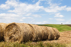 Tuscany agriculture Royalty Free Stock Photo