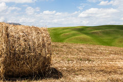 Tuscany agriculture Royalty Free Stock Photography