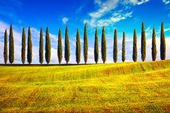 Tuscany bygd för rad för cypressträd landskap, Italien, Europa arkivfoton