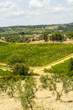 Tuscany - Chianti vineyards and olive trees, Stock Photo