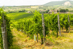 Tuscany - Chianti vineyards Stock Photos