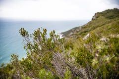 Tuscany coast vegetation Stock Image