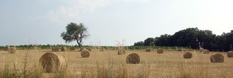 Tuscany countryside. A Tuscany Countryside panorama near Florence Royalty Free Stock Photography