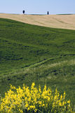 TUSCANY countryside, with blooming bush. Summer countryside in Tuscany, with blooming bush Stock Images