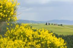 Free TUSCANY Countryside, Blooming Bush Royalty Free Stock Image - 6367046