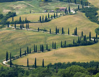TUSCANY countryside, devious street with cypress Stock Photo