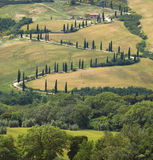TUSCANY Countryside, Devious Street With Cypress Stock Photos