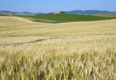 TUSCANY countryside with distant farm Stock Image