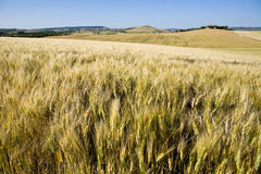 TUSCANY countryside with distant farm. Tuscan countryside with distant farm and meadow Stock Images