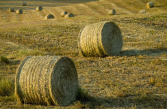 Tuscany countryside, hay-balls on the meadow stock image