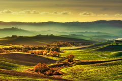 Tuscany countryside misty panorama, rolling hills and green fiel Royalty Free Stock Image