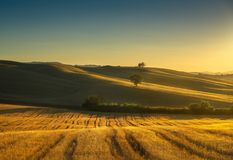 Tuscany countryside panorama, fields and trees on sunset. Italy Stock Image