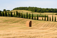 Tuscany countryside at summer. View of an hay bale in a field in Tuscany, Italy royalty free stock image