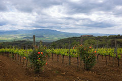 Tuscany countryside Royalty Free Stock Images
