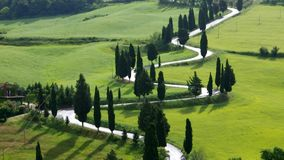 Tuscany cypress curve stock video footage