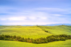 Tuscany, cypress tree and green fields. San Quirico Orcia, Italy. Royalty Free Stock Photography