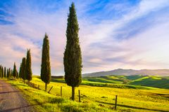 Tuscany, cypress tree group and rural road. Volterra, Pisa Italy Stock Image