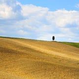 Tuscany, cypress tree on hill and fields. Siena Orcia, Italy. Stock Photos