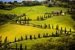 Tuscany, cypress tree road Royalty Free Stock Image