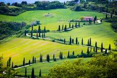 Tuscany, cypress tree road Royalty Free Stock Photo