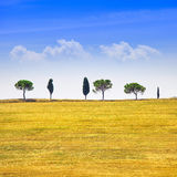 Tuscany, cypress trees and green fields. San Quirico Orcia, Italy. Royalty Free Stock Photography
