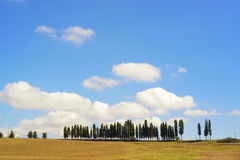 Tuscany, Cypress Trees on a hill rural Chianti landscape, Italy. Royalty Free Stock Photography