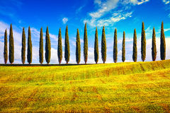 Tuscany, Cypress Trees row countryside landscape, Italy, Europe. Stock Photos