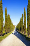 Tuscany, cypress trees and rural road, Italy, Europe Stock Image