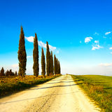 Tuscany, cypress trees, rural road. Siena, Orcia Stock Photo