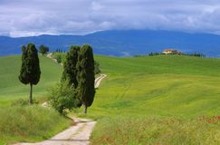 Tuscany cypress trees with track Stock Photos