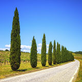 Tuscany, cypress trees, vineyard and road, rural landscape, Ital Stock Images