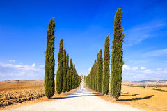 Tuscany, Cypress Trees white road rural landscape, Italy, Europe Stock Photography
