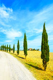 Tuscany, Cypress Trees white road rural landscape, Italy, Europe Stock Photo