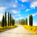 Tuscany, Cypress Trees white road rural landscape, Italy, Europe Stock Image
