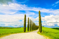 Tuscany, Cypress Trees white road rural landscape, Italy, Europe Royalty Free Stock Photo