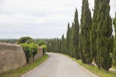 Tuscany cypressar Royaltyfri Fotografi