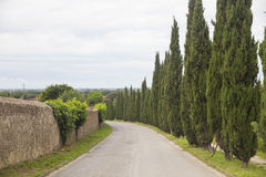 Tuscany cypresses Royalty Free Stock Photography