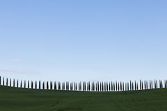 Tuscany cypresses. A long line of cypresses following an hill profile, beneath a big, blue sky, with some sparse clouds Royalty Free Stock Image