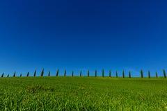 Tuscany cypresses row 1 Stock Image