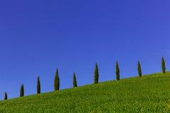 Tuscany cypresses row 2 Royalty Free Stock Photos