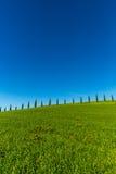 Tuscany cypresses row 3 Royalty Free Stock Photos