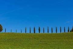 Tuscany cypresses row 4 Stock Photos