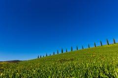 Tuscany cypresses row 6 Royalty Free Stock Photography