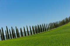 Tuscany cypresses row 7 Royalty Free Stock Photos