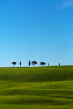 Tuscany cypresses seven Royalty Free Stock Photography