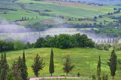 Tuscany cypressträd med spåret Fotografering för Bildbyråer