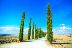 Tuscany, Cyprysowi drzewa biały drogowy wiejski krajobraz, Włochy, Europa fotografia royalty free